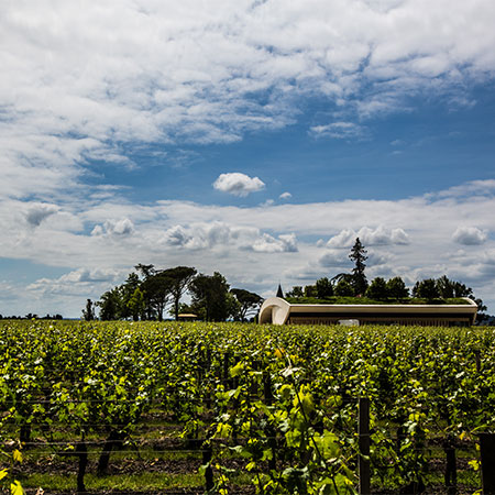 Cheval Blanc und Weinberg