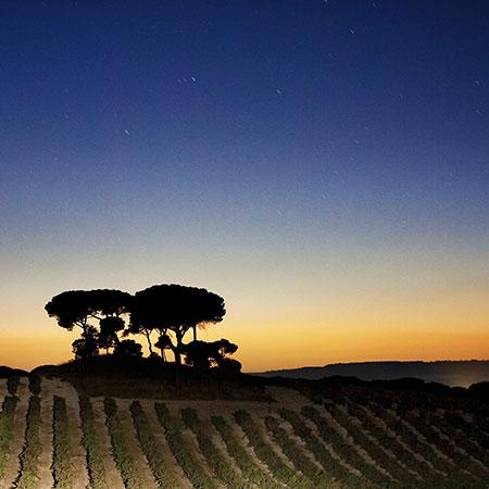 Sonnenuntergang in der Ribera del Duero