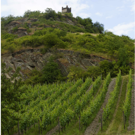 Lorcher Kapellenberg