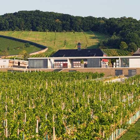 Domäne Steinberg - Kloster Eberbach